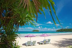 Mangrove and chairs. View of nice exotic tropic beach early in the morning royalty free stock image