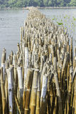 Mangrove conservation. And water erosion Royalty Free Stock Photography