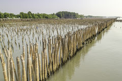 Mangrove conservation. And water erosion Stock Photos