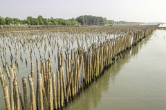 Mangrove conservation. And water erosion Royalty Free Stock Images