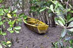 Mangrove, cradle of life Royalty Free Stock Photography