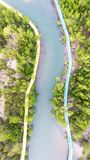 mangrove foto de stock royalty free