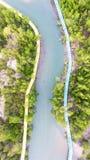 mangrove royaltyfri foto
