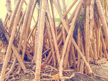 Mangrove dependent. Waterfront by river Royalty Free Stock Image