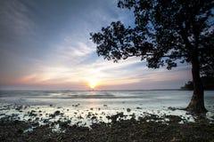 Mangrove door het strand Stock Foto's