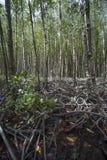 Mangrove in Dose Gio-` s Peildeck, Süd-Vietnam stockbild