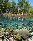 Mangrove ecosystem Stock Images