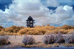 Mangrove education center in near infrared view IR view Stock Photo