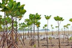 Mangrove en Wortels royalty-vrije stock foto