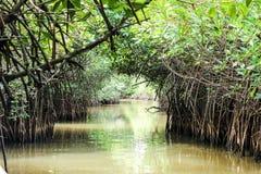 Mangrove. Farm at pichavaram. Tamilnadu, India Stock Photography