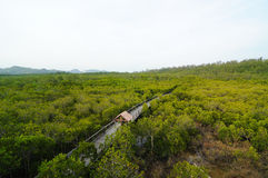 Mangrove field. This is mangrove field in Pranburi,Thailand Royalty Free Stock Photos