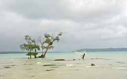Mangrove and fisherman Royalty Free Stock Photography