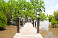 Mangrove forest Stock Photos