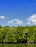 Mangrove forest1 Royalty-vrije Stock Fotografie