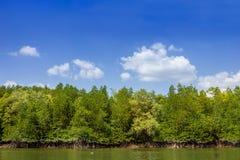 Mangrove forest1 Stock Afbeeldingen