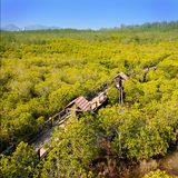 Mangrove Forest. Nature trail through the mangrove forest Royalty Free Stock Photos