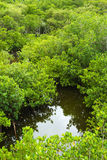 Mangrove Forest From Above Stock Photos