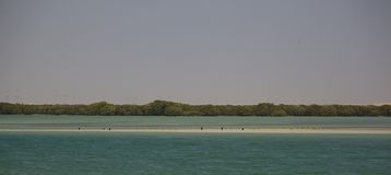 Mangroves of Al Khor, Qatar royalty free stock photo