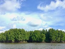 Mangrove forest along the river. Beautiful nature Stock Images