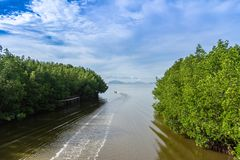 Mangrove forest along the river. Chomphon, Thailand : October 23, 2018 - Mangrove forest along the river, beautiful nature view stock photography