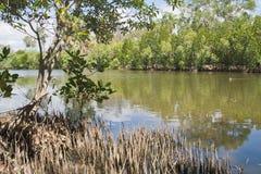Mangrove forest Stock Photos