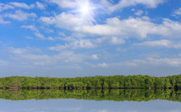 Mangrove forest and blue sky Royalty Free Stock Image