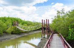 Mangrove forest with blue sky Royalty Free Stock Photo