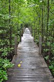 Mangrove forest boardwalk Stock Photo