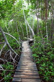 Mangrove forest Boardwalk Royalty Free Stock Photography