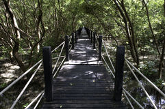 Mangrove forest Boardwalk Royalty Free Stock Photo