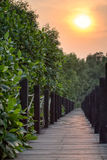Mangrove forest boardwalk Stock Photos