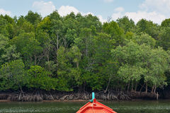 Mangrove forest with boat Stock Image