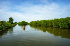 Mangrove forest with boat running in Ca Mau province, Mekong delta, south of Vietnam.  royalty free stock image