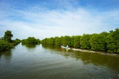 Mangrove forest with boat running in Ca Mau province, Mekong delta, south of Vietnam.  stock photo