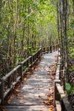 Mangrove forest bridge. In Botanical garden Royalty Free Stock Image