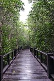 Mangrove forest and the bridge Stock Images