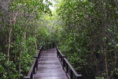 Mangrove forest and the bridge Stock Image