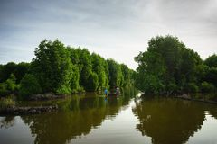 Mangrove forest in Ca Mau province, Mekong delta, south of Vietnam.  stock photography
