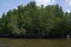 Mangrove forest in Chantaburi, Thailand.  Stock Photos
