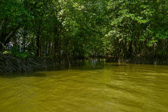 Mangrove forest in Chantaburi, Thailand.  Stock Images