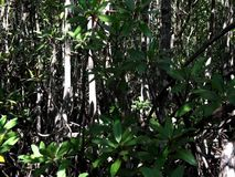Mangrove forest at the coast of the island of Palawan. Philippines stock video
