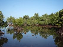Mangrove forest at the coast of the island of Palawan. Philippines stock footage