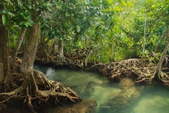 Mangrove forest. On the coast of Thailand Stock Photo