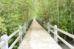 Mangrove forest conservation. Concrete bridge on the mangrove forest conservation area Royalty Free Stock Photos