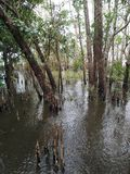 Mangrove forest conservation in Thailand Stock Photo
