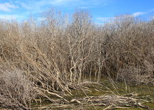 The mangrove forest degradation Stock Photo