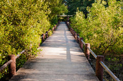 Mangrove forest ecotourism pathway in conservative site Phuket, Royalty Free Stock Photos