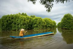 Mangrove forest with fishing boat in Ca Mau province, Mekong delta, south of Vietnam.  royalty free stock images
