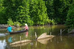Mangrove forest with fishing boat in Ca Mau province, Mekong delta, south of Vietnam.  stock images