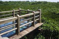 Mangrove forest, hainan island in China Stock Photo
